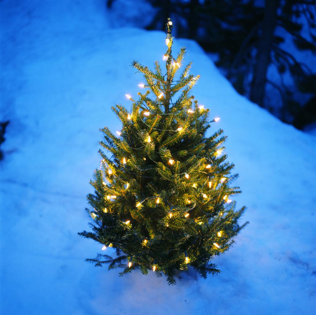 Christmas Tree Outside Wallpaper Hd